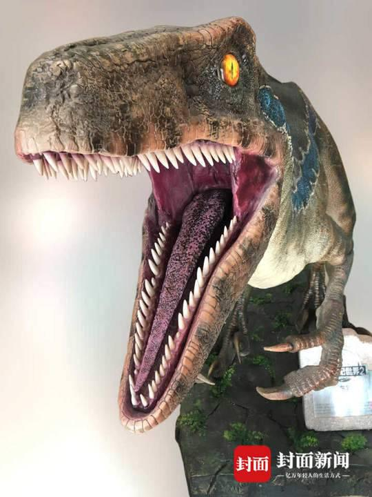 侏罗纪世界中的Blue就属于驰龙类。摄影 邢立达