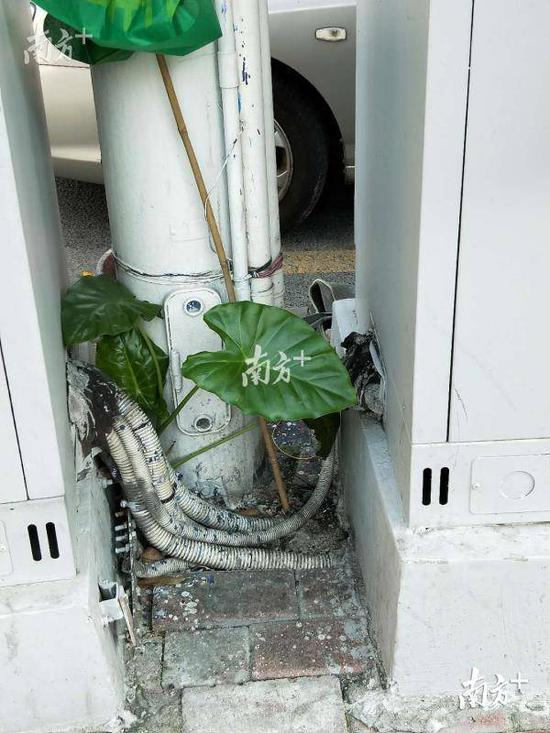 珠江新城金穗路人行道上的市政电箱。
