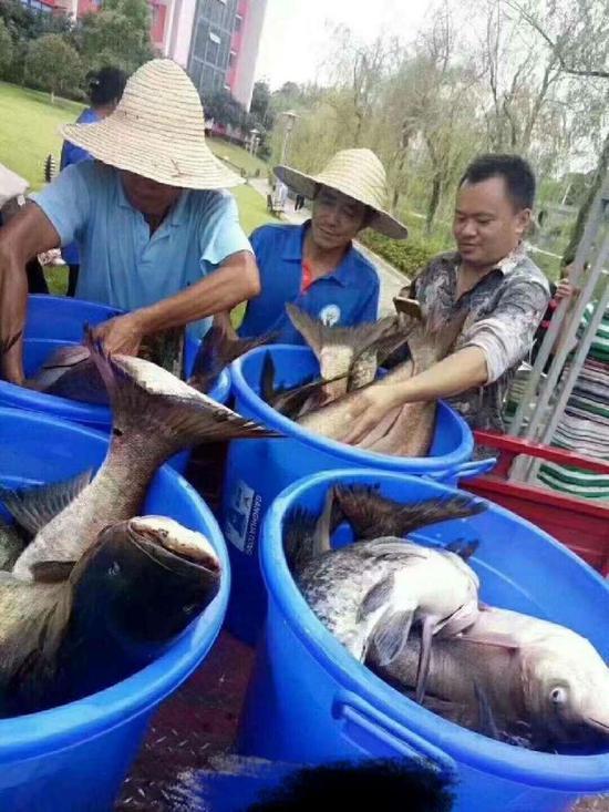 重庆又一高校打捞万斤鱼:将做剁椒鱼头等给师生吃