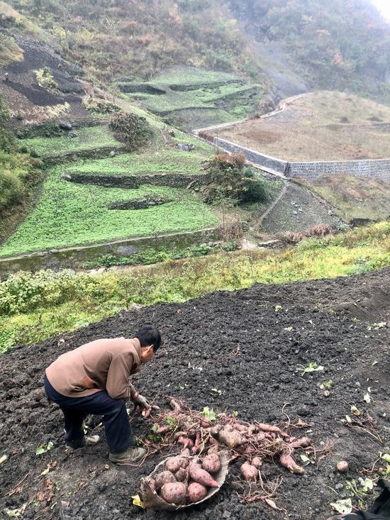 安康市白河县干子坪的一处修复的渣场,一位村民正在渣场旁边的山坡上挖红薯。