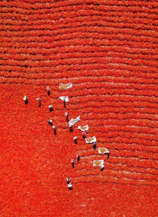 安散海辣椒晒场,拍照师@正在近圆的阿伦/星球研讨所