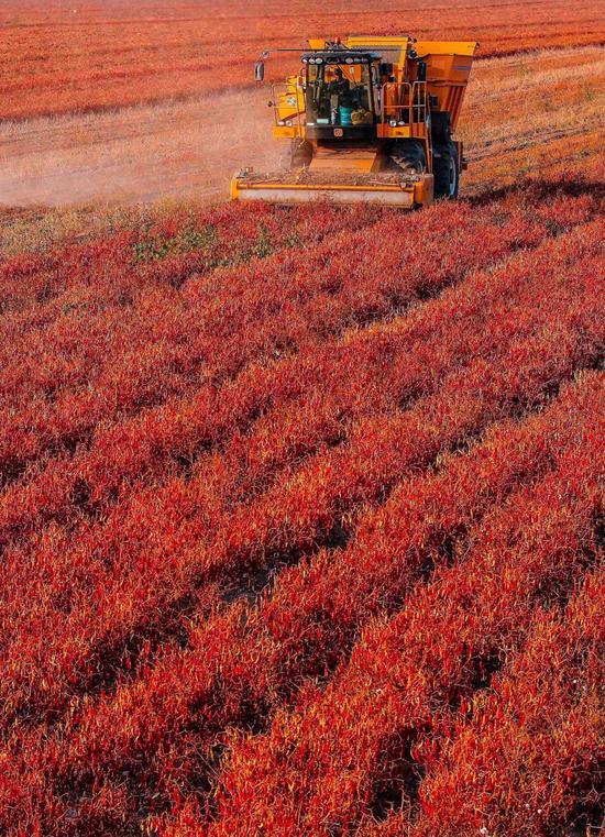 凶林洮北市当代化农场,拍照师@邱会宁/星球研讨所