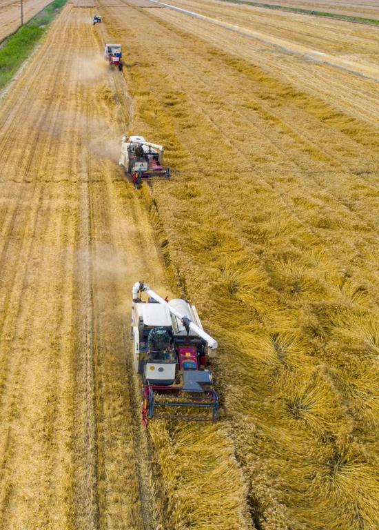 江苏北通,海安农场职工正在用支割机支割小麦,图片滥觞@VCG