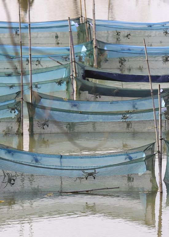 江苏淮安,网箱养殖螃蟹,图片滥觞@VCG