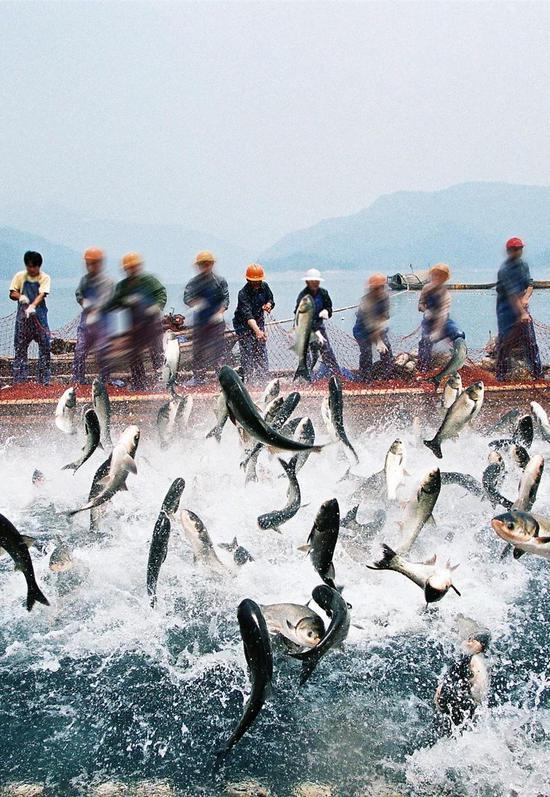 浙江千岛湖巨网打鱼,图片滥觞@VCG