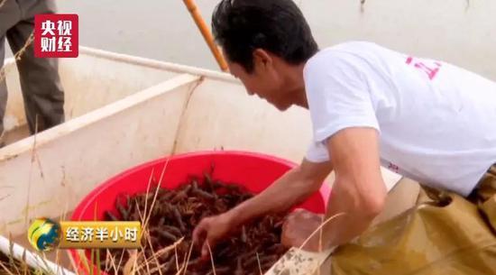 一只小龙虾串出百亿年产值 最值钱的却不是虾肉