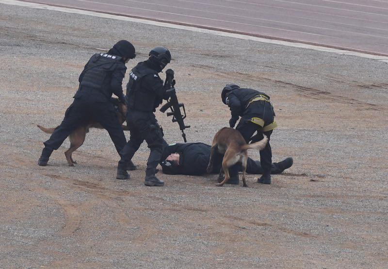 特警队员在警犬协助下将嫌疑人制服。 摄影 新京报记者 吴宁