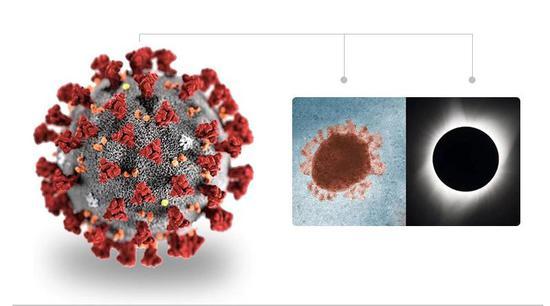 CDC 創建的新冠病毒立體模型。