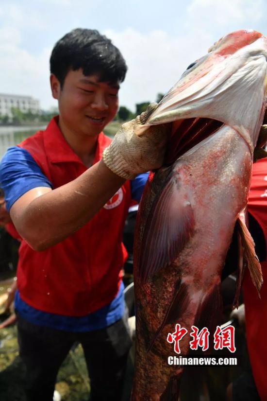图为一条被捕捞上岸的大鱼。 张浪 摄