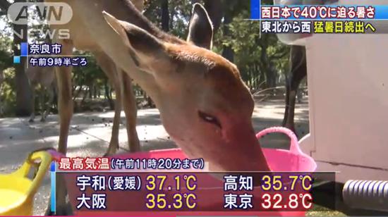 奈良19日最高气温达到38度(朝日电视台)