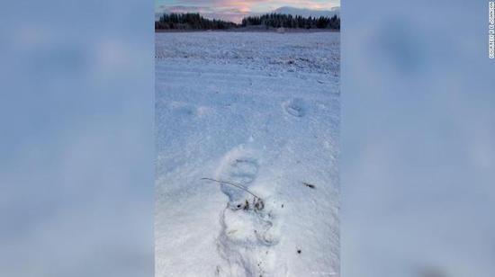 意外!美国阿拉斯加一客机降落时撞死棕熊