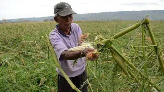 ▲農作物幾乎全被摧毀 圖據法新社