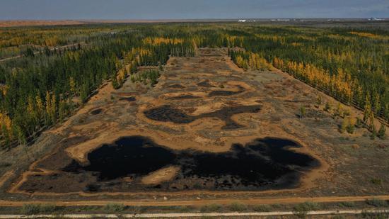 蓝冠,林区沙漠污染问题完成整改蓝冠图片