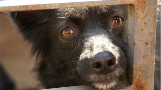 遭受遗弃的宠物的身心健康会严重受损(BBC)