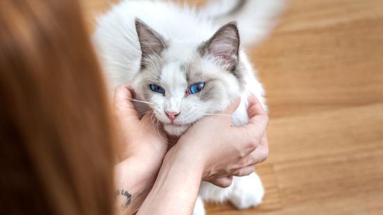 英国出现人传宠物新冠病毒案例 两只猫被主人传染