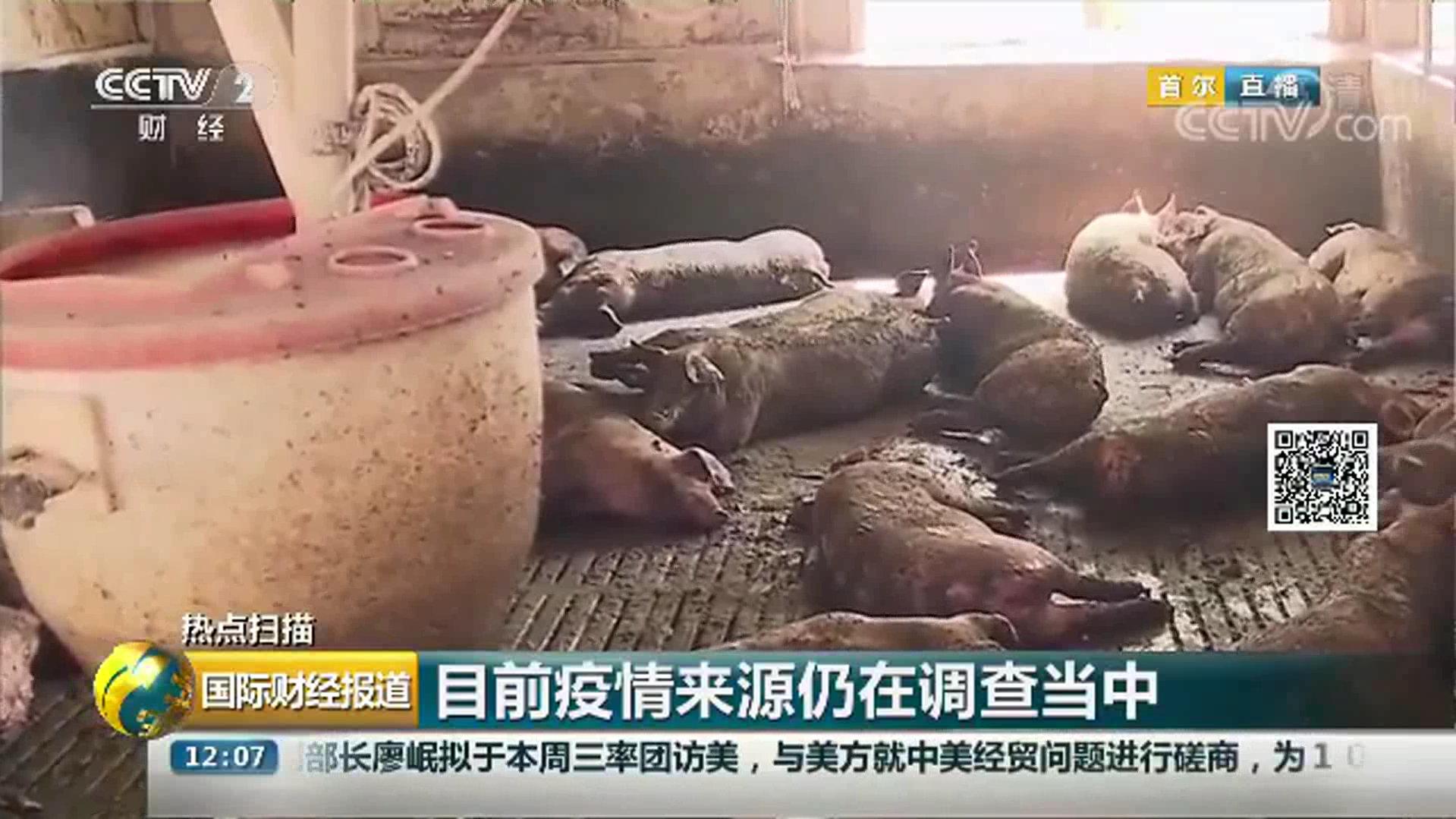 视频-韩国确认首例非洲猪瘟疫情 近四千头猪被扑杀