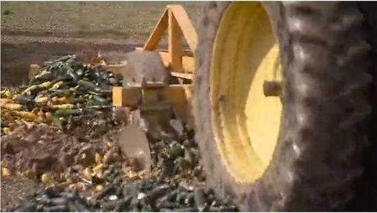 本地农夫正在碾碎玉米,并举行掩埋。图据福克斯消息
