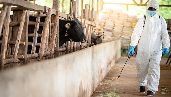 河北8天新增新冠感染354人,农村疫情形势为何严峻?图片