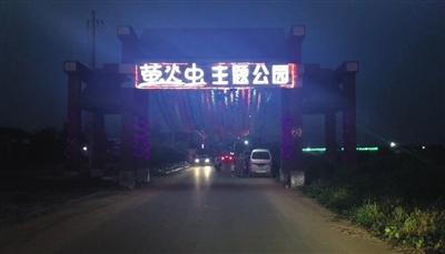 8月17日至19日,栾城举办首届萤火虫节。新京报记者 寇佳祥 摄
