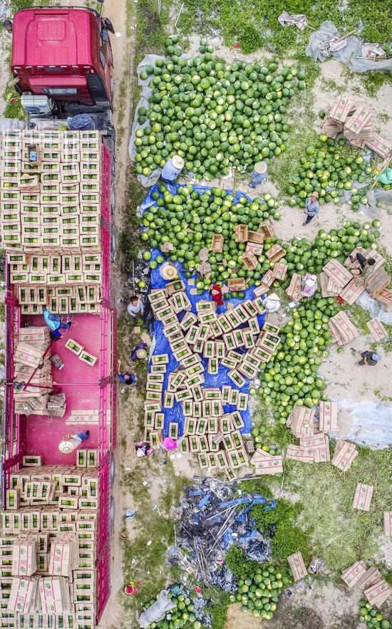 海北文昌龙楼镇齐好村西瓜栽种基天,图片滥觞@VCG