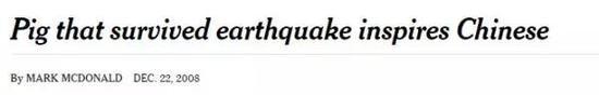 ▲《纽约时报》报道猪坚强截图