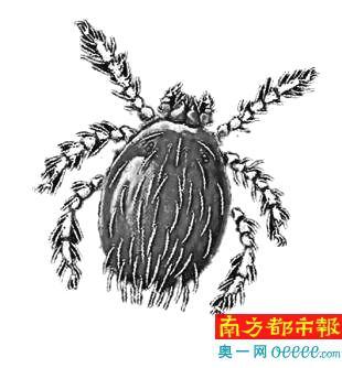 男子广州打工疑似患恙虫病 持续高烧10天不治身亡