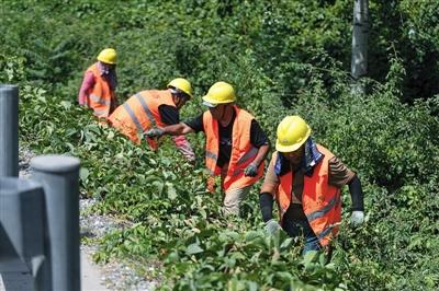 昨日,西五环,首发集团绿化公司的员工在高温下整理桥梁环路周边的绿化。新京报记者 陶冉 摄