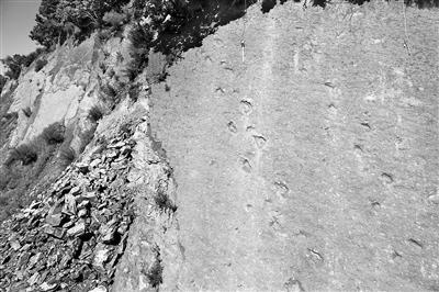 蜥脚类恐龙行迹