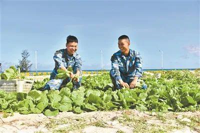 军在三沙海滩种出蔬菜摩天平台对,摩天平台图片