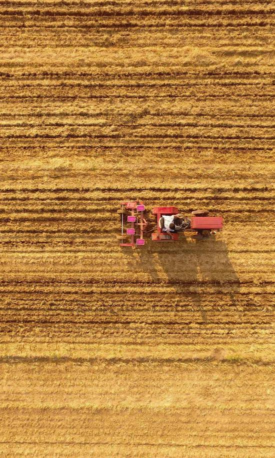 家庭农场实施玉米年夜豆间做收获形式,图片滥觞@VCG