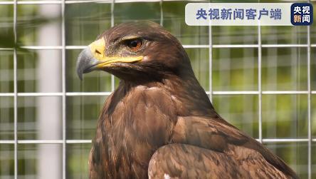 【杏悦】联手救杏悦助8只国家级珍稀鸟类图片