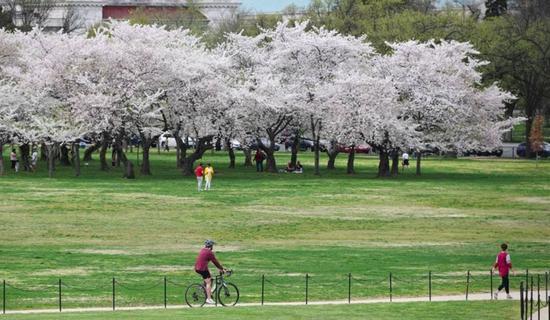 3月27日,在美国首都华盛顿,人们在国家广场绿地上。  图:新华社
