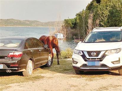 图为:受损的车辆和肇事枣红马