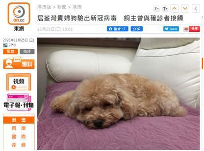 香港一只贵宾犬新冠检测呈阳性,目前未出现相关病症图片