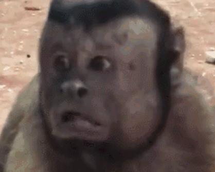 猴子长人脸 未命名 热图3