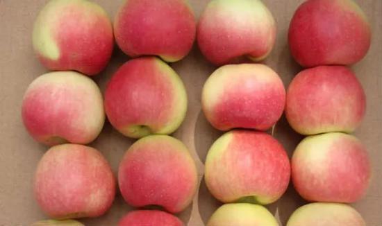 ▲美國的蘋果也在印度的增稅名單裏,關稅上調至70% (圖via india.com)