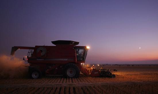 加拿大阿尔伯塔省的一位农民采用联合收割机收割小麦。