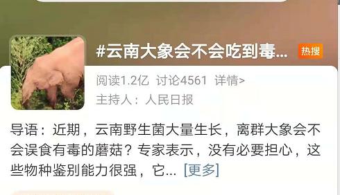 云南大象会不会吃到毒蘑菇?1亿网友围观操碎了心