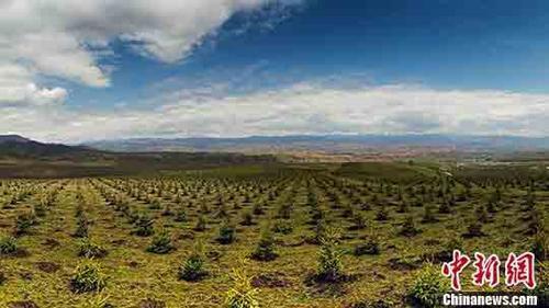"""国家林草局:""""十三五""""期间我国造林5.29亿亩图片"""