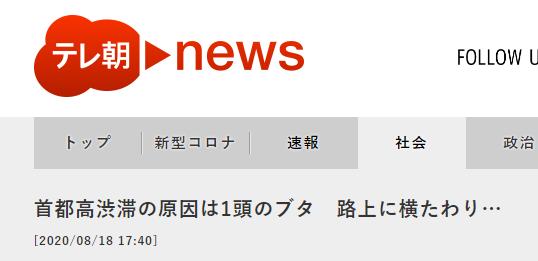 ANN:东京高速拥堵原因是一头猪躺在路中间