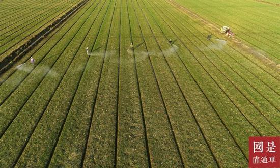 联合国粮农组织:新冠肺炎会对农业和粮食安全产生什么影响?