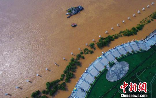 6月11日,航拍贛江南昌段水位暴漲,沿江景觀樹受淹在渾濁的江水之中。 劉佔昆 攝