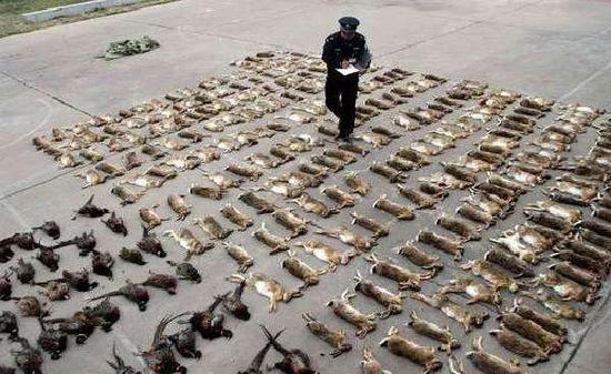 19名院士学者联名呼吁:立法禁食野生动物!图片