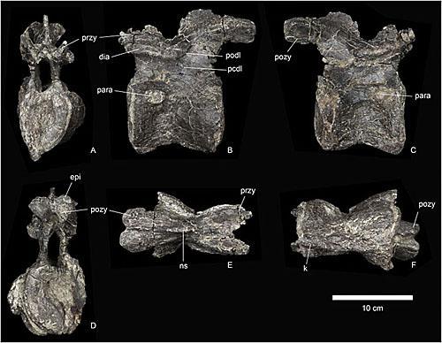 最古老剑龙化石被发现 英媒:扩大对恐龙演变认识|侏罗纪