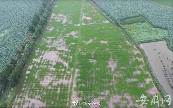 物受灾已补改种15,亿兴app官网图片