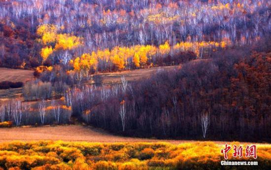 国家林业和草原局:全面停止天然林商业性采伐|林业