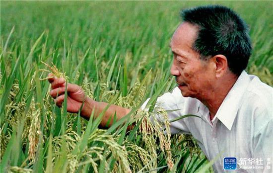 ↑20世纪90年代末,袁隆平在观察两系法杂交晚稻的生长情况(资料照片)。新华社记者殷菊生摄