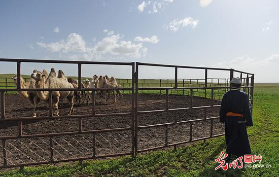 草原牧民的现代生活:五畜齐全 人丁兴旺