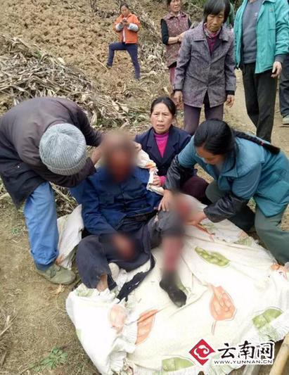 野猪接连咬伤5名村民 当地按野猪肇事险赔偿(图)