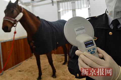 马身上植入了身份芯片,用专用仪器扫描能显示该马的信息。新京报记者 王嘉宁 摄